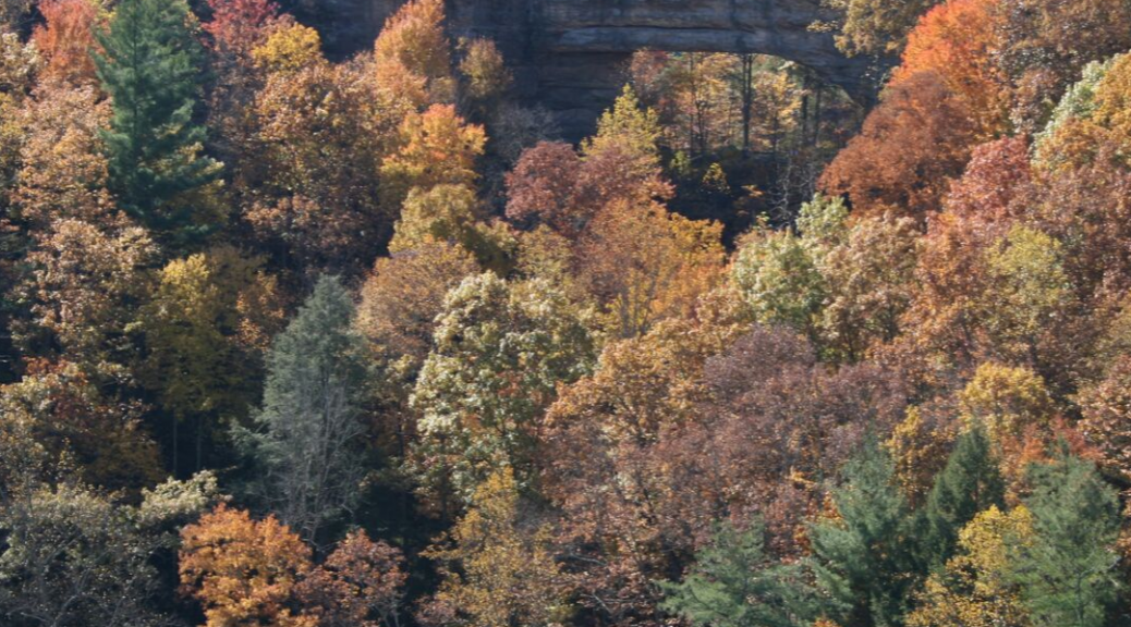Things To Do In Red River Gorge KY